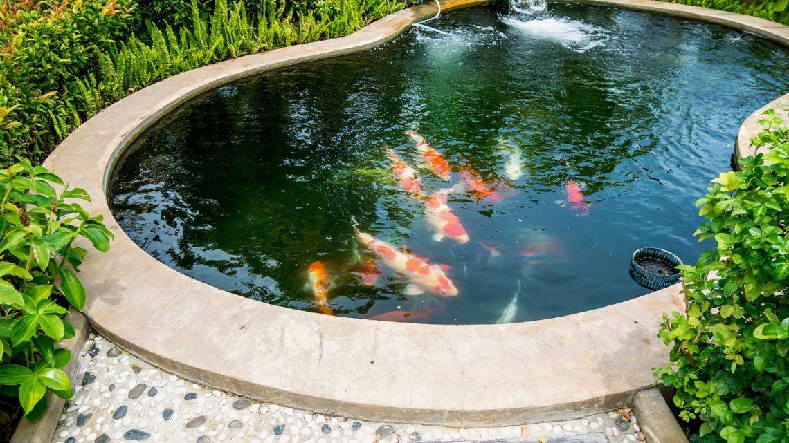 Comment rendre votre bassin plus beau grâce à une pompe a bassin?